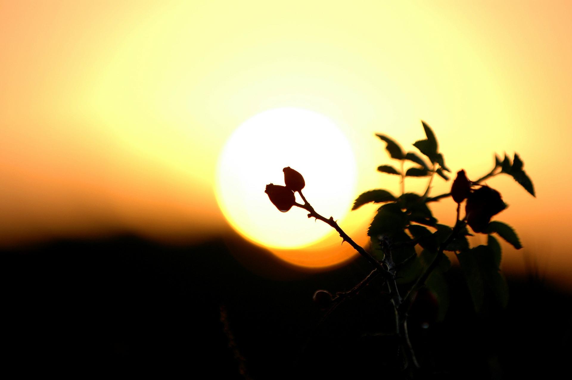 """Sunshine (Image by <a href=""""https://pixabay.com/users/minder-23683/?utm_source=link-attribution&amp;utm_medium=referral&amp;utm_campaign=image&amp;utm_content=86291"""">minder</a> from <a href=""""https://pixabay.com/?utm_source=link-attribution&amp;utm_medium=referral&amp;utm_campaign=image&amp;utm_content=86291"""">Pixabay</a>"""